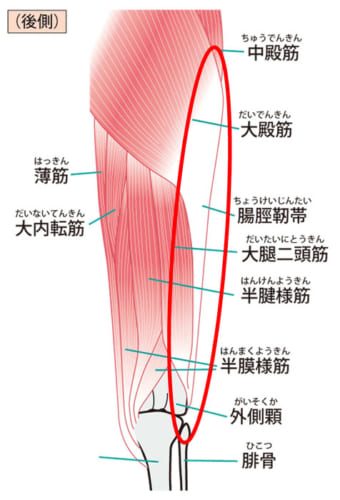 『ITバンド=腸脛靭帯』