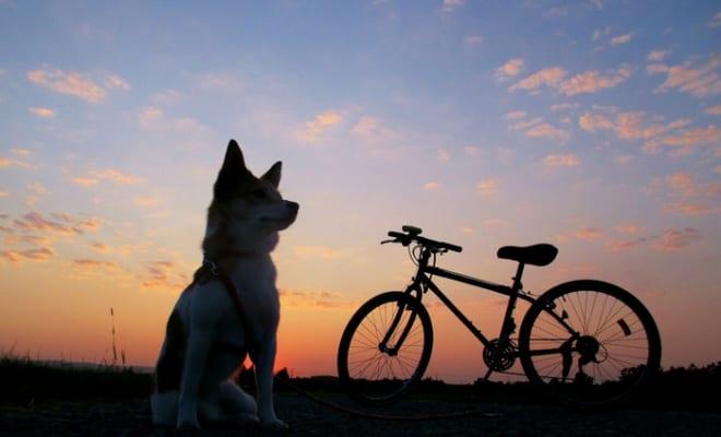 最後の1年は介護の日々。もしかしたら、ずっとペットロスなのかもしれません|【愛犬との別れ、ペットロス体験記】