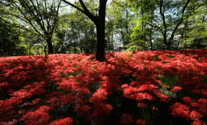 彼岸花の咲く不思議な空間