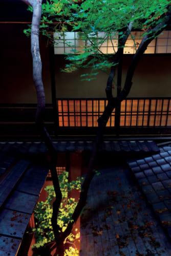 2階の客室「108 ガーデンビュー スイート」の廊下から階下を眺める。樹齢70年ほどのモミジが枝を伸ばす小さな坪庭が見える。