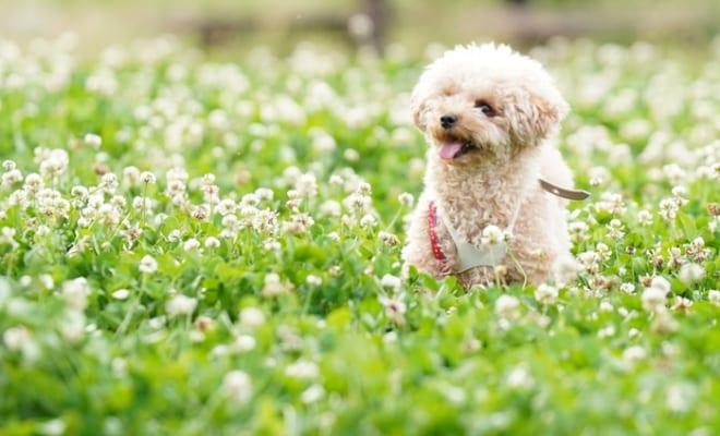 救ってくれたのは同じ悲しみを経験した犬仲間と今の愛犬