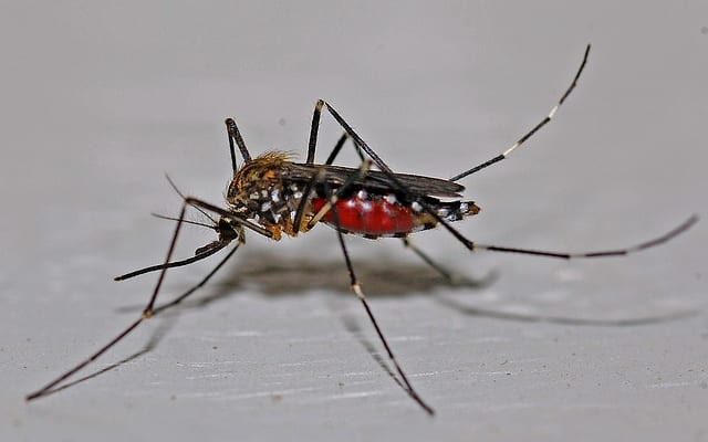 世界を震わすマラリアの恐怖!?