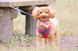 【夫婦の距離】かわいい愛犬にケガをさせた粗暴な犬は、上司宅の犬!~その1~