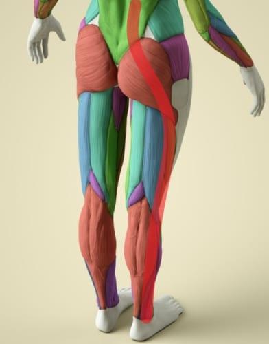 図1 赤ライン 足首→すねの外側→腿の外側→お尻
