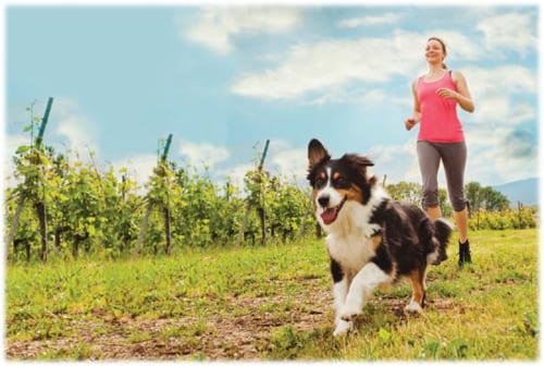 健康のための運動は「愛犬と一緒」が効果的!|愛犬家の9割がやる気・継続性・絆などのメリットを実感!