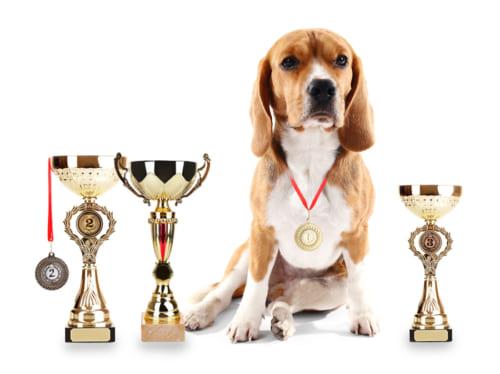 もしも、ペット版オリンピックがあったら…?|自分のペットを参加させたい競技は「リレー」がNo.1!