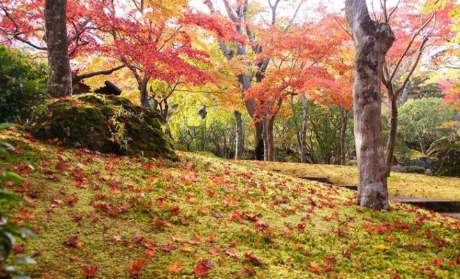 1位神奈川県 箱根(192票)