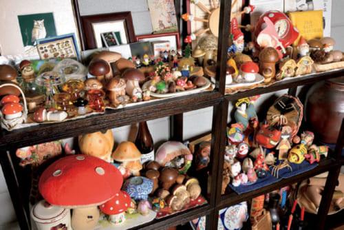 茸に夢中になり、集めた茸コレクション。かつては兵庫や大阪、京都、奈良の山々に分け入り、茸を採取していた。それだけでなく、鉢植えでキヌガサタケを栽培したこともある。