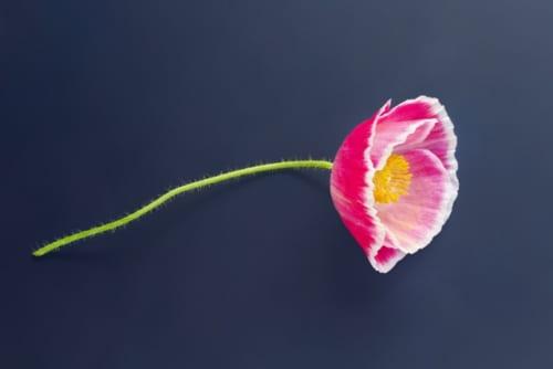 【ビジネスの極意】夏目漱石「虞美人草」に学ぶ、働くことの意味