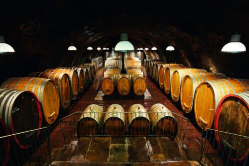 ヴィットマンのカーヴ。ドイツワインには1000L以上の大きな樽が伝統的に使われる。