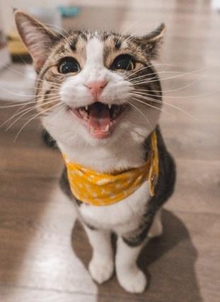 猫の笑顔は「伸びる」印象