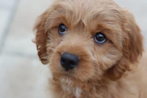 犬の生態に関することわざは、意外と少ない