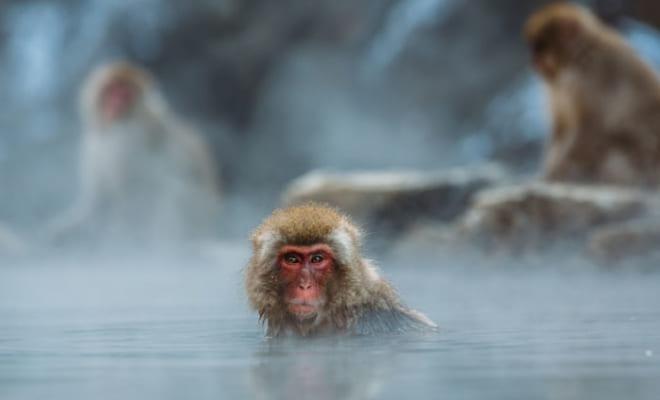 温泉ツウが選ぶ2019年温泉ランキング!|みんなが気になる温泉地やウラ話!