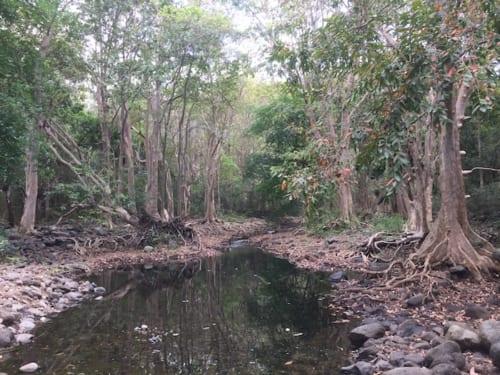 国立公園内の渓流