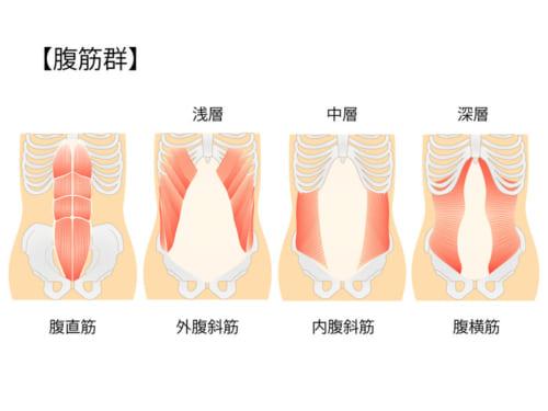 これらの筋肉は層状に重なっており、その部位や機能から、浅層・中層(中間層)・深層の3つの層に分類されています