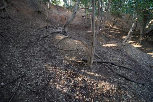 「焼米出土地」の脇にある畝状竪堀 朝倉時代のものわかる数少ない遺構の一つ。