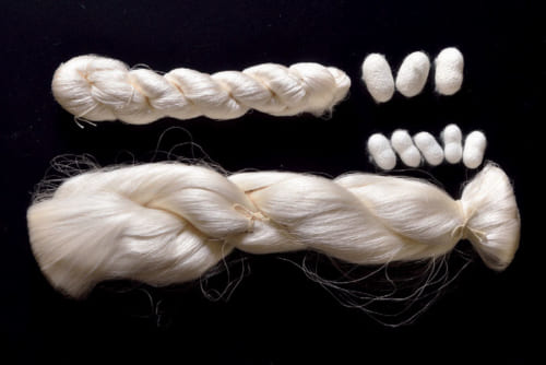皇居内の紅葉山御養蚕所だけで飼育されていた古代繭「小石丸」の解禁を受けて、誉田屋では平成14年から小石丸で作品を制作。写真上は一般的な繭と生糸、下が小石丸のそれ。小石丸は一般の3分の2の太さで軽く、取れる糸は一般の4分の1ほどだという。