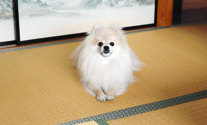 第1位の『優鶴』の宣伝部長を務める看板犬「リンク」