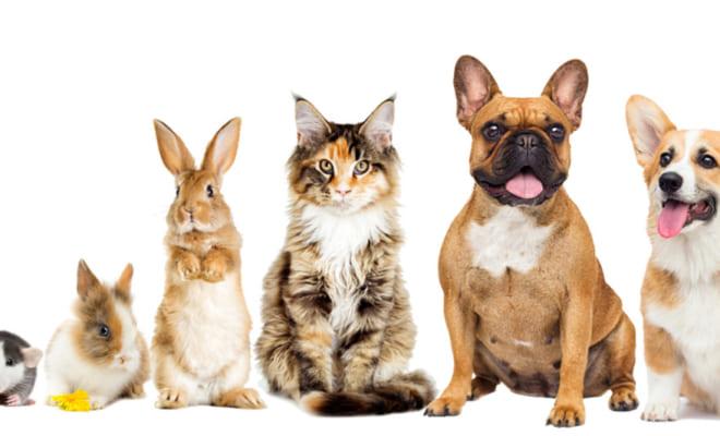 人気飼育犬種・猫種ランキング2019
