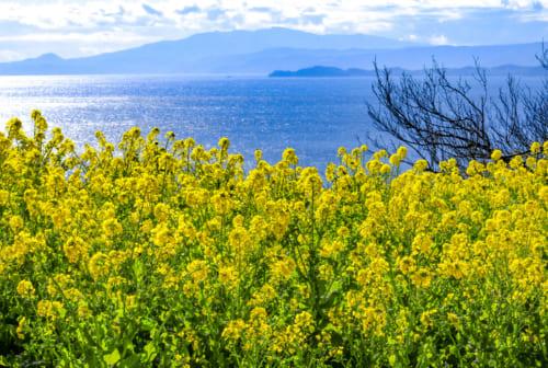 遠くに見える真鶴半島と、その先に伊豆半島も