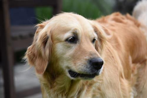 愛犬の終活を迎える時に、準備しておきたい大切なこと