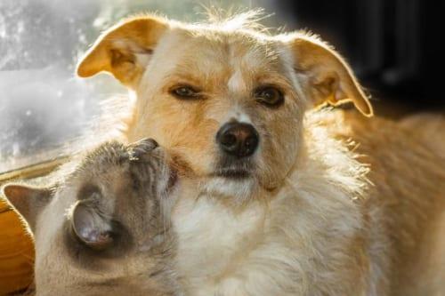 新型コロナウイルスに関して飼い主さんが知っておきたい3つのポイント