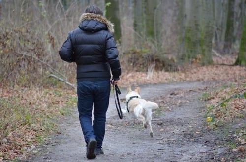 犬の散歩は犬のためだけに行うのではない。人の健康にも大きな効果。