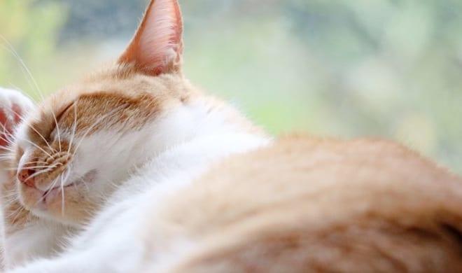 2020年 猫の寄生虫対策に関する最新調査