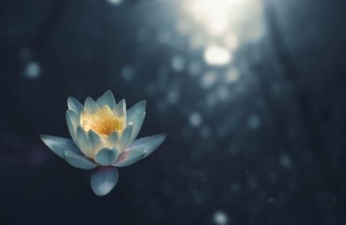 【瞑想に興味のある女性1,053人に聞きました!】実際に瞑想したことがある?、ない?