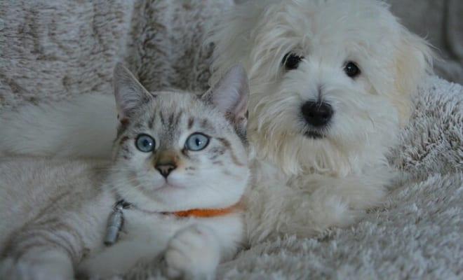 【緊急提言】ペットのコロナ対策、飼主さんへ3つのアドバイス