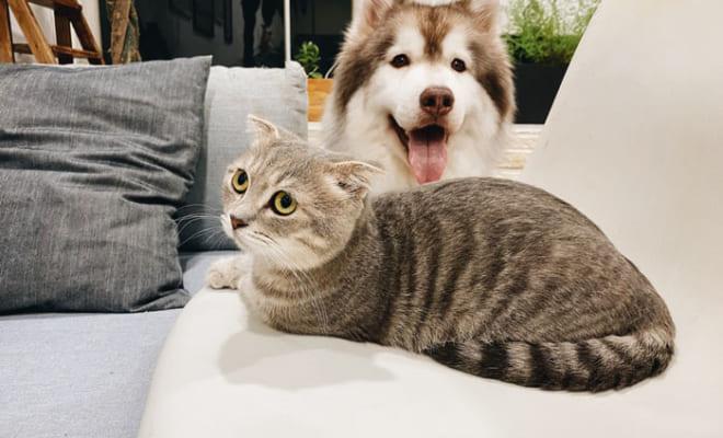 【獣医さんに聞く】成功する!譲渡会でのペットの引き取り