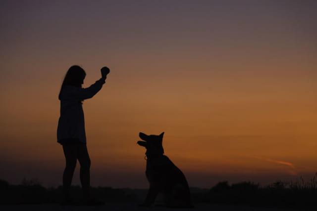 狂犬病を克服した日本だからこそできる、死の病との戦い方