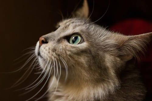 特に猫のトイレチェックは重要
