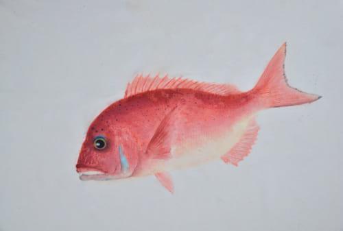 初めてカラー魚拓を見たのが、マダイのそれだった。上は龍香さんの手になるマダイのカラー魚拓で、薄い色から13回もインクを塗り重ねて、奥行きのある美しい赤い色を出す。