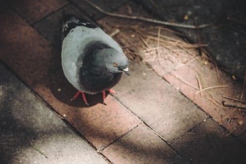 8割以上は個人宅! 鳩の被害相談に関する実態調査