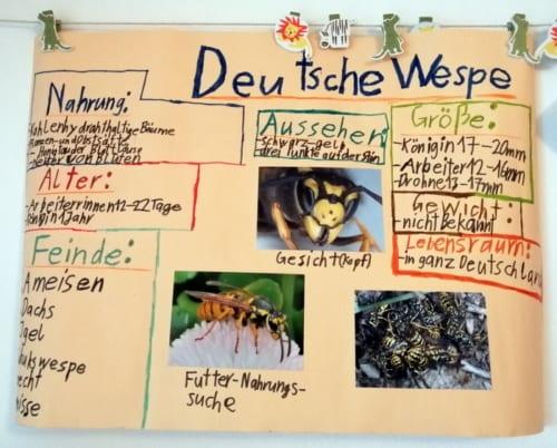 生活の課題「昆虫についてプレゼン用のポスターを作る」(3年生)。撮影/北野令子