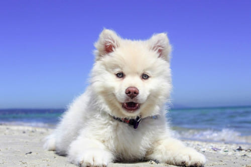 【獣医さんに聞く】今すぐやりたい、ペットの夏の紫外線対策とは?